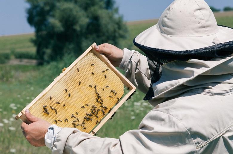 пчеловод на сайт