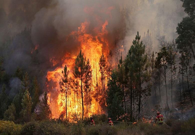 пожар на сайт